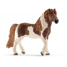 Island Pony hengst