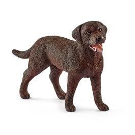 Labrador Retriever, femelle