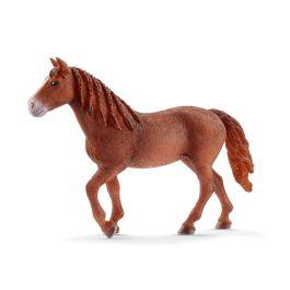 Morgan Horse Stute