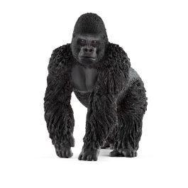 Gorilla Männchen
